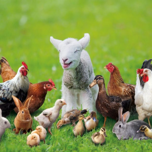 Springtime Farm Animals